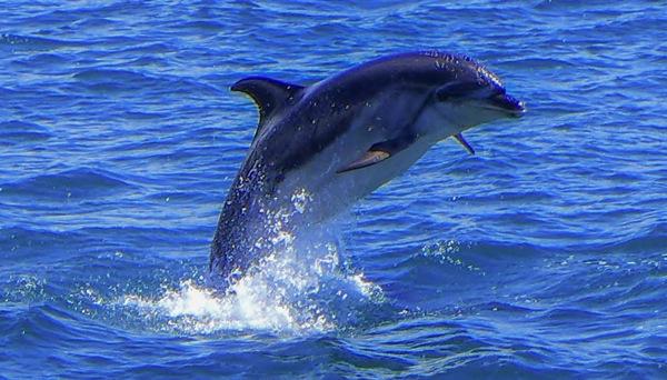 Dolphin 10