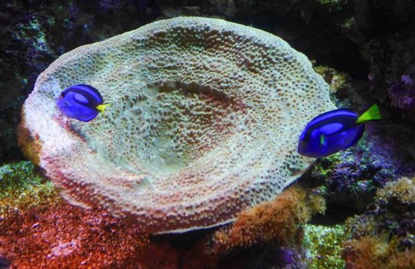 Littlefish 1