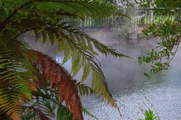 Rotorua Lumix 7